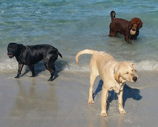 Diesel, Mercedes, and Chevy doing what they do best... Frolicking!